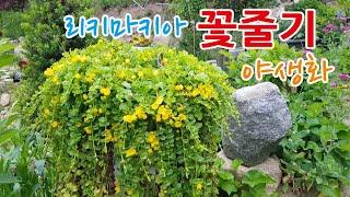 리키마키아의 아름다운꽃줄기 &야생화 얼굴들 친절…