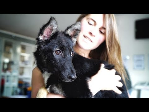 ABUSED and BROKEN DOG meets her family for the first time !