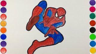 Dạy Vẽ Tranh và Tô Màu Cho Bé - Vẽ  Siêu Nhân Người Nhện Spider Man - Dibuja y pinta a Superman