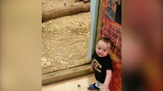 Top 10 TOP 9 CUTEST BABIES AND ANIMALS IN ZOO | Funny Babies and Pets