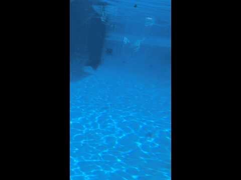 Mum n baby whale swimming