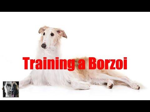 Training a Borzoi - Dog Training Video - ask me anything