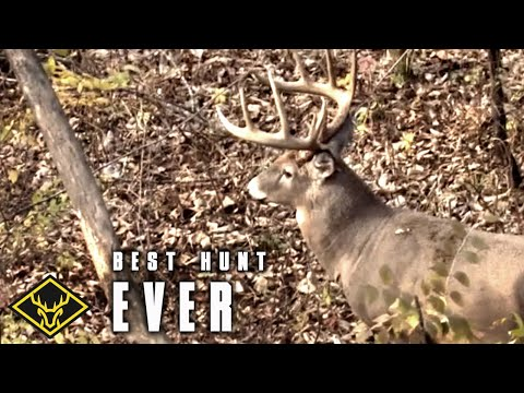 Best Deer Communication EVER Captured!