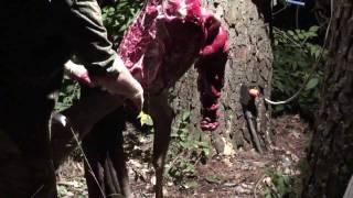 Deadeye Deer Process - Preview Doe At Night