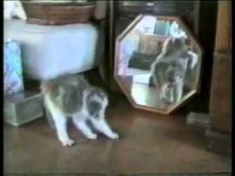 you ve been framed   funny cat   youtube