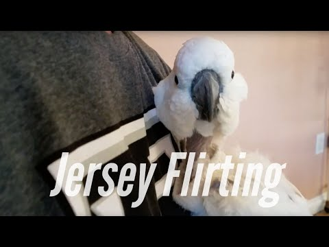 My Parrots Don't Care About Hard Work | PARROT VIDEO OF THE DAY
