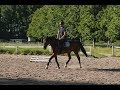 Susi - flatwork clips // July 2017