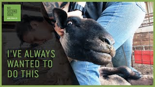 The Wife-Wife Professional Sheep Shearing Team
