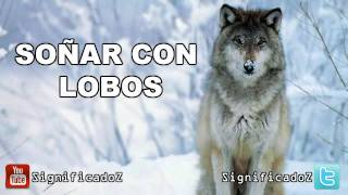 Significado de Soñar con Lobos 🔞 ¿Que Significa?