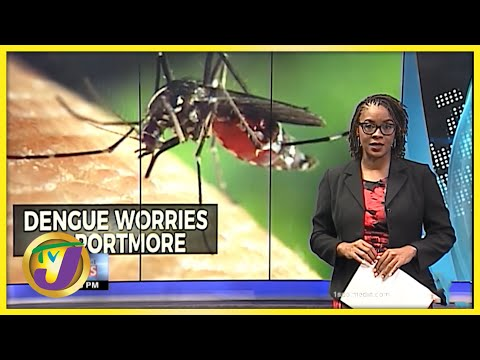 Dengue Fears in Portmore Jamaica   TVJ News - Sept 10 2021