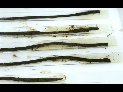 Bamboo Slips Written with Ancient Classics Unearthed from 2000-year-old Tomb