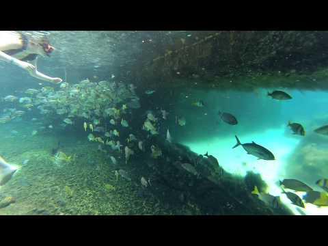 Grand Cayman Turtle Farm Snorkeling