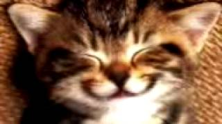 Kucing Nyanyi Happy Birthday