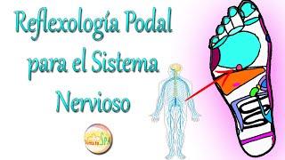 El sistema nervioso como ayudar a mejorar