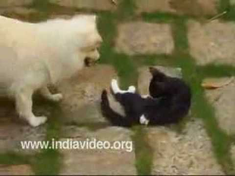 Fighting cat and dog – funny video clip
