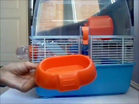 Покупка новой клетки/дюны // Переезд // 100 подписчиков - YouTube
