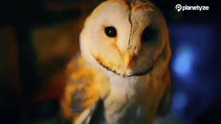Owl no mori, Tokyo - Tokyo's Latest Animal Cafe Craze | One Minute Japan Travel Guide