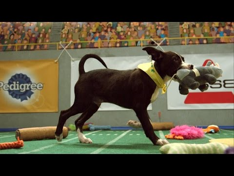 Puppy Bowl XI Ends in a Thrilling Touchdown | Puppy Bowl XI