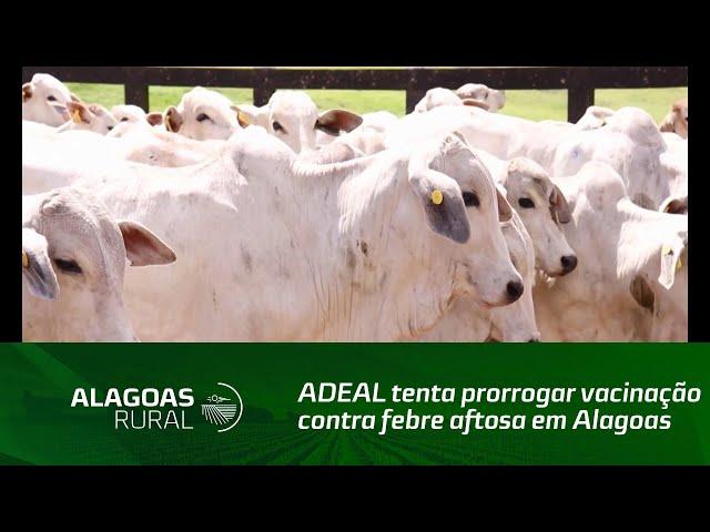 ADEAL tenta prorrogar vacinação contra febre aftosa em Alagoas