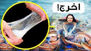 حتى القروش تخاف هذه السمكة المخاطية، فما بالك بالبشر؟