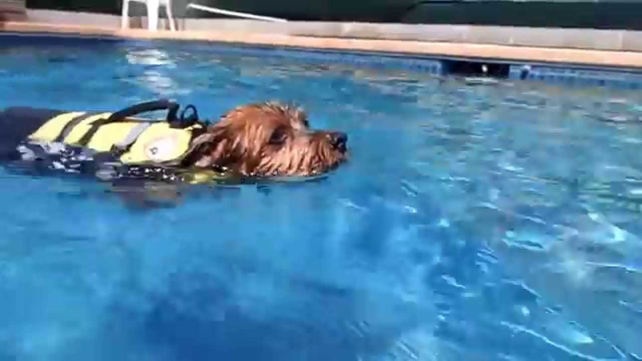 Rummy S Dog Swimming