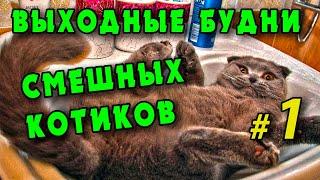 Смешные котики 2021 Лучшие видео с веселыми котами и кошками Смешно и мило до слез