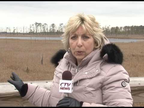 Blackwater Wildlife Refuge Climate Change