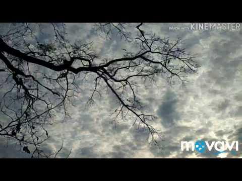 Спокійний короткий відеоролик про природу