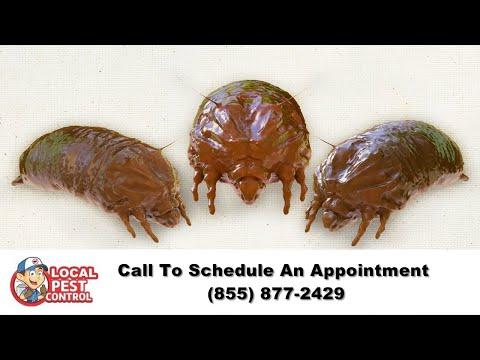 Cedar City Bed Bug Exterminator | Cedar City Bed Bug Removal | Bed Bug Pest Control