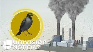 Las plumas de las aves pueden contar la historia de la contaminación del aire