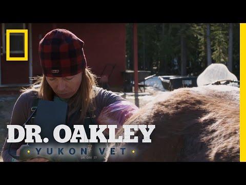 Hands Up a Horse | Dr. Oakley, Yukon Vet