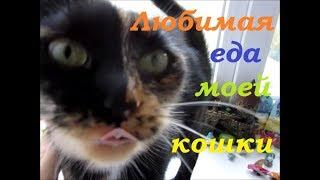 Корм для кошек , что ест моя кошка