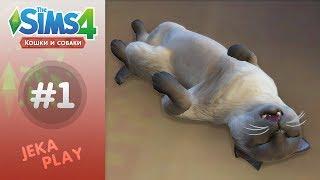 The Sims 4 Кошки и собаки | Милые создания! - #1