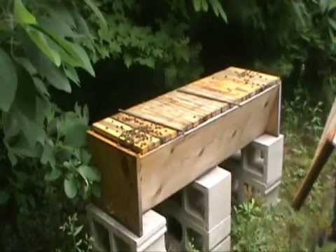 Pulling Honey From A Top Bar Hive