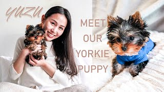 First Week With A Yorkie Puppy!