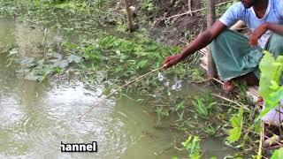 Best Fishing Video|सर्वश्रेष्ठ मछली पकड़ने का वीडियो|Best Hook Fishing|सर्वश्रेष्ठ हुक मत्स्य पालन