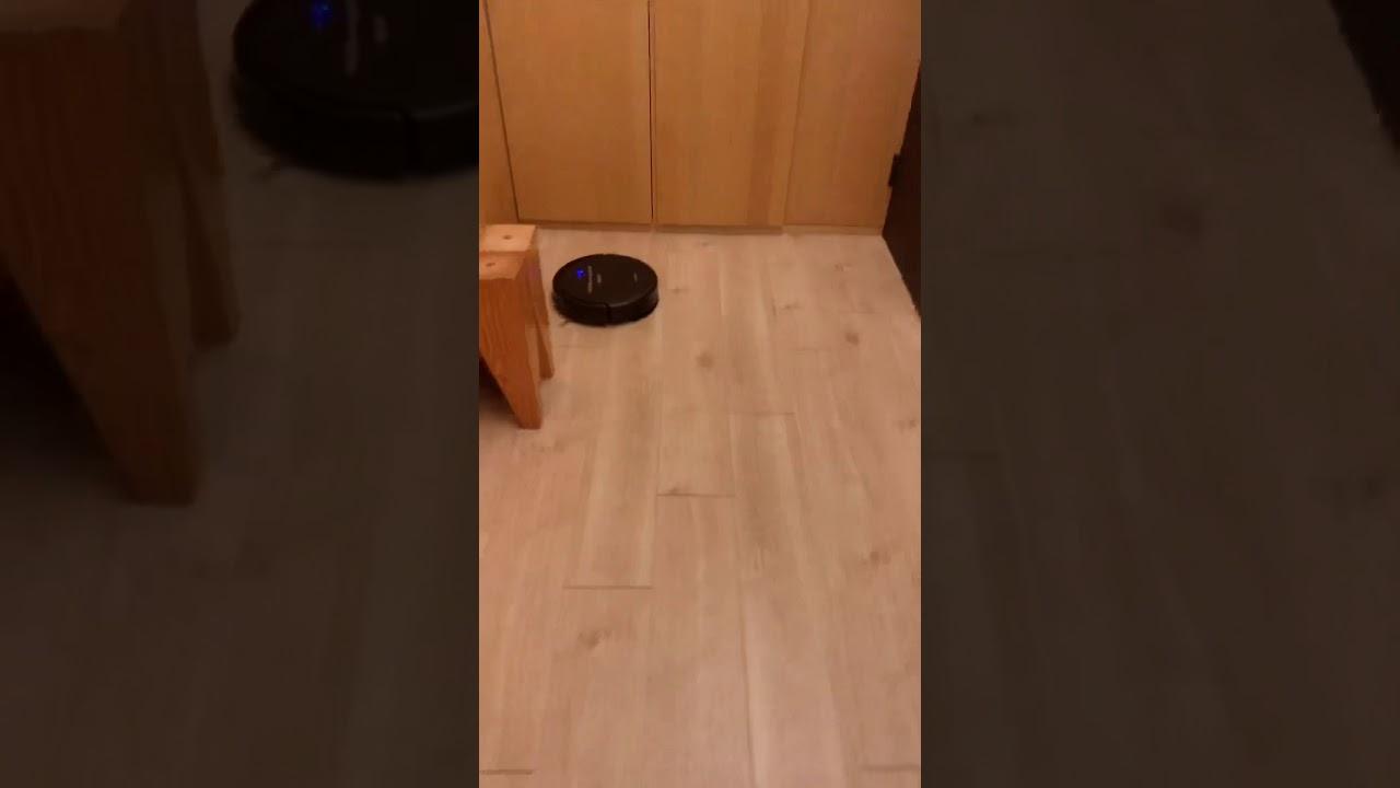 第一次看見掃地機器人的貓 - YouTube