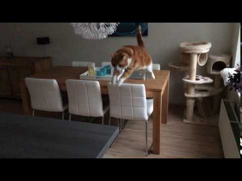 Cat jumping in slow motion
