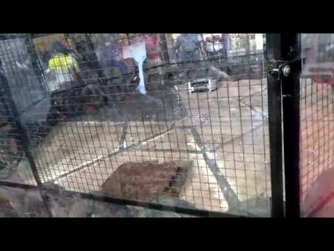Bsquare vs EDM robowar at IIT Madras