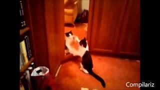 Коты, собаки и отражение. Как реагируют животные на зеркало!