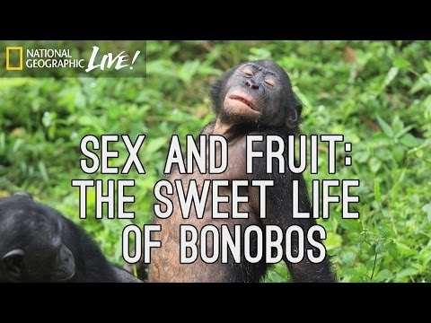Sex and Fruit: The Sweet Life of Bonobos | Nat Geo Live