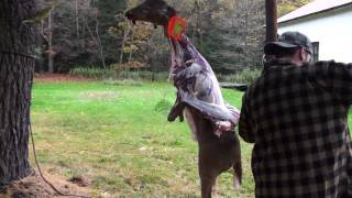 an introduction to how to properly clean a deer for hunters Questions and answers clean (no meat or tissue therefore deer hunters must follow carcass importation regulations in home states when they transport a deer.