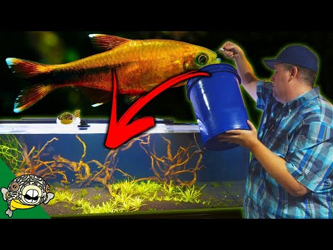 ADDING 100 SILVERTIP TETRAS TO THE 230 GALLON AQUARIUM SCHOOLING FISH