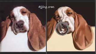 big ears dog speed painting (photoshop)