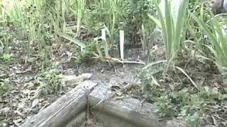 Fire Ant Control Made Easy (Full Version)