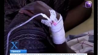 Вирус Эбола превращает людей в зомби  Х версии  Другие новости  1800 будни