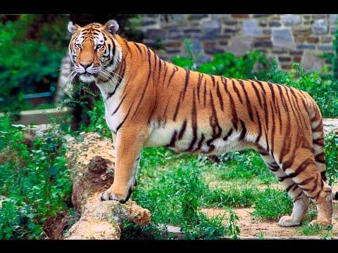 kolkata alipur zoo video