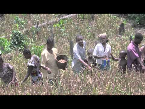 Congo Agricultural Reactivation and Shipping Project