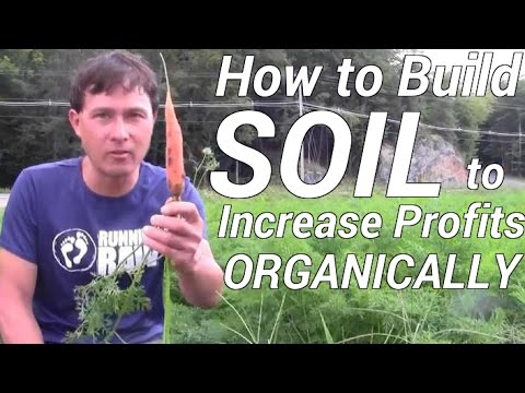 How to Best Build Soil to Increase Profit When Organic Farmi