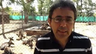 Daniel Villarreal, biólogo del Zoo Córdoba explica el ataque a los ciervos en ese predio